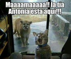 Ups ... #memes #chistes #chistesmalos #imagenesgraciosas #humor www.megamemeces.c...