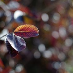 leaves and bokeh by Victor Bezrukov