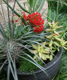 Container gardening with succulents Container Gardening, Succulents, Plants, Succulent Plants, Plant, Container Garden, Planets