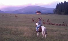 Cattle Trail Riding in North Slovakia