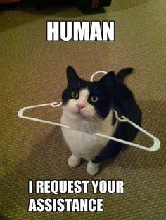 This is sooo Kidda!!! I swear that cat gets himself into more predicaments than any other animal... he must be down to like 3 or 4 lives!