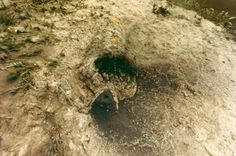 Untitled (Fetish Series)  1978  Photographie couleur montée sur carton, tirage d'origine  33,7 x 50,8 cm http://www.galerie-lelong.com/fr/oeuvres-ana-mendieta-239-p1.html