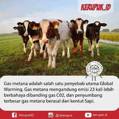 Metana adalah gas anaerobik yang dihasilkan dari aktivitas mikroorganisme saat menguraikan bahan-bahan organik.  Selama ini ternyata sapi merupakan salah satu hewan ternak penyumbang terbesar gas metana. Pencernaan sapi yang lambat menjadi alasan mengapa binatang itu menghasilkan begitu banyak gas metana.  #infia #infiafact #wowfakta #dagelan #memecomicindonesia #tahukahanda #fyiindo #fakta #indonesia #unik #fact #facts #didyouknow #likeforlike #like4follow #like4like #info #infografik…