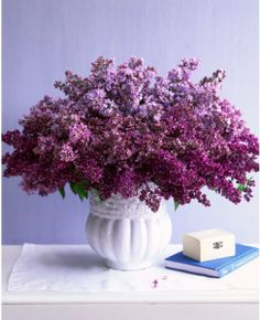 I must be dreaming of spring. Lilacs remind me of the fresh, dewy springs at my grandparent's house.