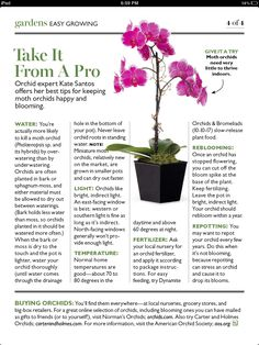 Orchid care tips from Orchid Expert Kate Santos… not really DIY but useful if you like your orchids to live ; Garden Plants, Outdoor Gardens, Plant Care, Green Thumb, Flower Care, Plants, Planting Flowers, Gardening Tips, Orchids Garden