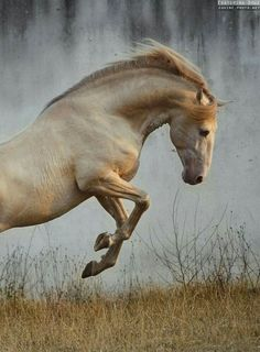 nature animale し le cheval au galop horse equine equus Most Beautiful Horses, All The Pretty Horses, Animals Beautiful, Cute Horses, Horse Love, Horse Photos, Horse Pictures, Animals And Pets, Cute Animals
