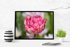 Pink tulip Digital art download photography by LydiaVideiraLight