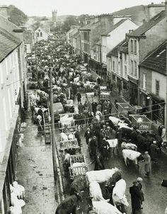 "Irish Farm Life... By Dorthea Lange 1954 ""Livestock Market"""