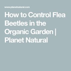 How to Control Flea Beetles in the Organic Garden | Planet Natural