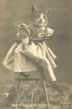 World's First Cat Meme, circa 1900