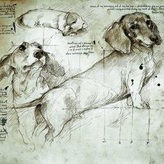 DaVinci had Dachsunds. Dachshund Drawing, Dachshund Art, Cat Drawing, Drawing Sketches, Painting & Drawing, Animal Drawings, Cool Drawings, How To Make Drawing, Dog Portraits