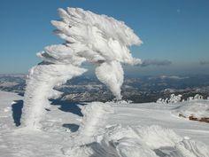 MONT AIGOUAL. Un arbre sous le gel. Languedoc-Roussillon