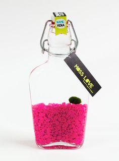 XENA // Lucky Pet Marimo // Marimo Moss Ball Terrarium by MossLoveTerrariums, $25.00