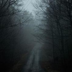 Into the woods, Noah Kalina