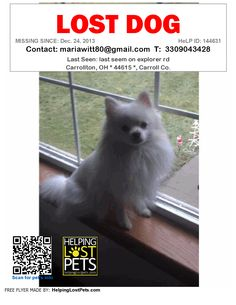 Lost Dog - Pomeranian - Carrollton, OH, United States
