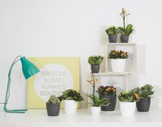 love the mini brussels #planters #decoration