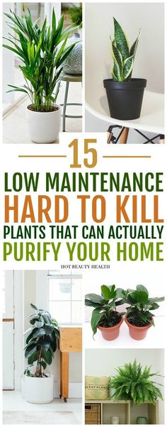 The best air purifying plants that are super low maintenance and hard to kill. ( gerbera daises, snake plants, peace lily, boston ferns, and more) Many need only low light and are also pet safe.