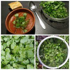 ☆ TOMATENSOEP MET WILDE GROENTE Ingrediënten: - verse winterpostelein en vogelmuur - eenvoudige tomatensoep. Bereiding: Maak een eenvoudige tomatensoep (tomaten, bouillon, tomatensap, ui, knoflook, vermicelli, peper en zout naar smaak). Was de wilde groente en snijd ze in stukken. Serveer op de soep een flinke hand vol verse groente.