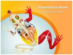 Animal Digestive System PowerPoint Presentation Template is one of the best Medical PowerPoint templates by EditableTemplates.com. #EditableTemplates #Stomach #Studying #Toad #Dissected #Animal Kidney #Digestive #Skull And Crossbones #Animal Skull #Section #Anatomic #Animal Skeleton #Anatomy #Internal #Body #Healthcare And Medicine #System #Map #Animal Heart #Medicine #Vessel #Veterinary Medicine #Scheme #Animal Body #Cardiac #Muscle #Doll #Animal #Order #Circulatory #Inside #Science…