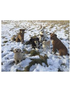 BryanFuller Bryan Fuller 2h MEET THE ACTORS PLAYING WILL GRAHAMS DOGS #THESTRAYS #HANNIBAL