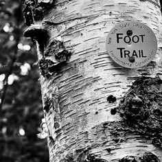 Adirondacks foot trail marker (one of the older ones)