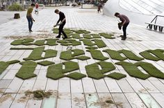 Lettering pasto cesped real