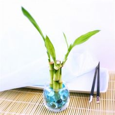 Bamboo gardening zen: Bubble Votive Favor