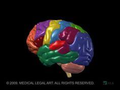 Brain Anatomy and Functions - YouTube