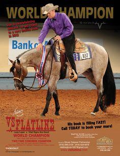 VS Flatline- I love Highpoint performance horses!!!