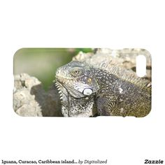 Purchase a new Reptile case for your iPhone! Shop through thousands of designs for the iPhone iPhone 11 Pro, iPhone 11 Pro Max and all the previous models! Reptiles, Iphone Case Covers, Islands, Caribbean, Nature Photography, Photos, Animals, Pictures, Animales