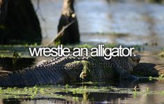 Check! Did this in Florida when I was 13. The gator wasn't very big though, only a 4 footer.