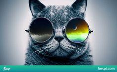 cool cat #kot #okulary #photo