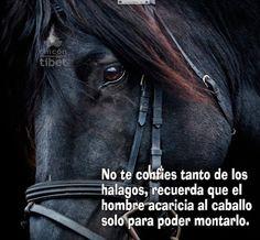 ... No te confíes tanto de los halagos, recuerda que el hombre acaricia al caballo sólo para poder montarlo.