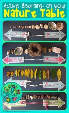 A+ Teaching Tips Green Grubs Garden Club: Bringing active learning to your Nature Table PART 1 How P Forest School Activities, Nature Activities, Science Activities, Science Centers, Kindergarten Science, Preschool Math, Preschool Ideas, Maths Eyfs, Numeracy
