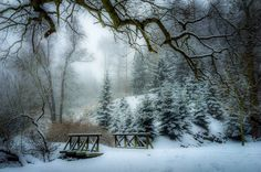 ***A snowy day in the park by Marek Boguszak (Czech Republic) E