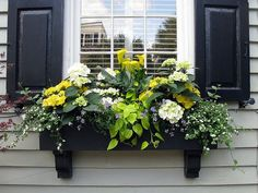 Black window box with black shutters, Tradd Street, Charleston, SC - Pflanzideen Br House, House Front, Front Porch, Window Box Flowers, Black Shutters, House Shutters, Window Planter Boxes, Planter Ideas, Window Box Plants