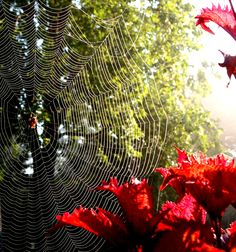 Sun shining thru the Spider's Web