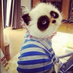kitty cat :] or baby panda?