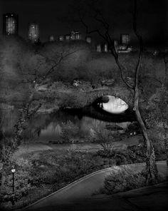 Deep In A Dream Central Park par Michael Massaia - Journal du Design