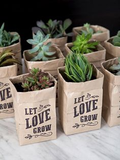 """These DIY """"Let Love Grow"""" Succulent Wedding Favors Are The Cutest! These printable Let Love Grow succulent wedding favors are the cutest!These printable Let Love Grow succulent wedding favors are the cutest! Wedding Favors And Gifts, Succulent Wedding Favors, Creative Wedding Favors, Elegant Wedding Favors, Wedding Favor Bags, Beach Wedding Favors, Personalized Wedding Favors, Bridal Shower Favors, Wedding Ideas"""