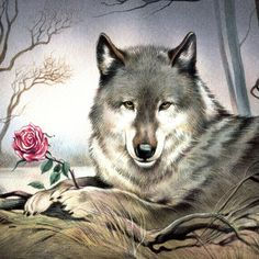 Native American Wolf, Native American Artwork, Beautiful Wolves, Animals Beautiful, Cute Animals, Wolf Images, Wolf Photos, Eagle Pictures, Wolf Pictures