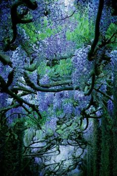 Indigo Dreams • Le jardin de La Ballue au beau milieu du bocage...
