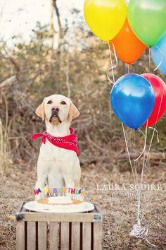 dog birthday photo shoot :: Laura Squire Photography