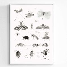 In love with this limited edition Bugs print by Karin Cyrén for Fine Little Day @pippaandike