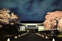 二条城 北大手門の桜ライトアップ  #京都 #春 #kyoto #spring #japan