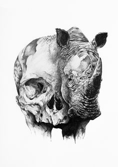 Ivan Kamargio is agraphic designer, photographer and illustrator from Mexico. The style of imagery in his art is defined by the macabre and the surreal. We've got an array of skulls andmetamorphosisof women intoexotic birds.When you look closely at the way hemanipulates hispencil you can see a great level of skill, particularly, in his shading.... http://illusion.scene360.com/art/65119/the-rhino-and-the-skull/