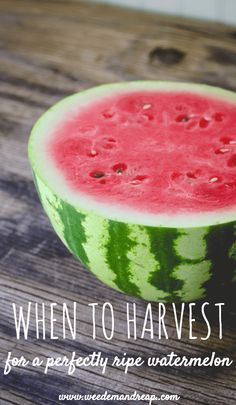 How do you know when to harvest watermelon? Follow this crazy simple trick and you'll always have success in the garden! http://www.weedemandreap.com/when-to-harvest-watermelon/