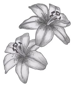 Lily flower drawing and flower tattoo designs lily tatto flower drawings Lily Tattoo Design, Flower Tattoo Designs, Tattoo Sketches, Tattoo Drawings, Lilies Drawing, Tatto Love, Lily Flower Tattoos, Quarter Sleeve Tattoos, Image Deco