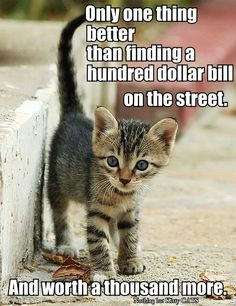 """Millie. Found her in the parking lot of HEB, in Texas, in 1987. Had this tiny kitten in the palm of my hand. Asked my husband """"how much do you love  me?""""  He responded """"Just enough...why?""""  Had that cat for 15 years."""