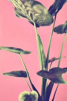 Green Still Life Leaf Prints, Still Life, Pink And Green, Lana, Print Patterns, Plant Leaves, Artwork, Photography, Design